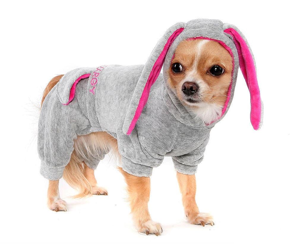 Одежда для маленькой собаки своими руками фото