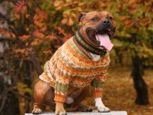 Одежда для собаки своими руками фото