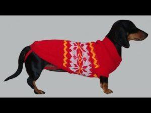 Одежда для собаки своим руками фото