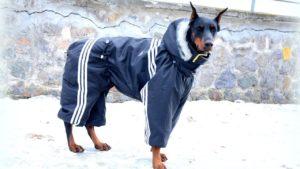 Одежда для большой собаки своими руками фото
